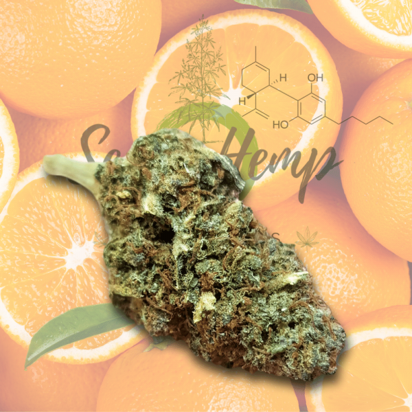 Nuova cannabis Orange Crash