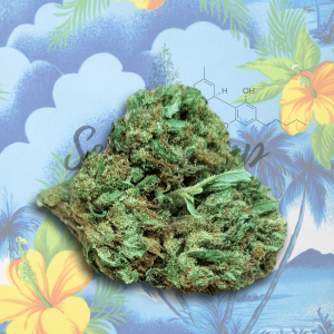 Fiori di cannabis light Hawaiiankiwi