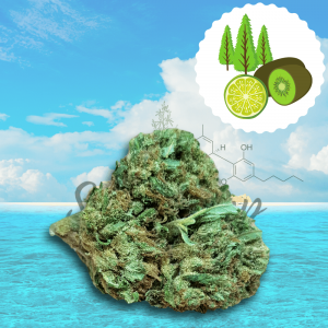 Cannabis light Hawiian Kiwi