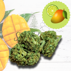 Cannabis Legale So Mango XL